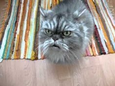 Grumpy cat's long lost cousin from Finland
