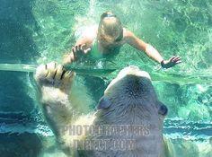 Bear Habitat, Unusual Homes, Zoos, Stables, Exhibit, Animal Kingdom, Polar Bear, Summer Fun, Habitats