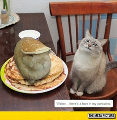 """There's a hare in my pancakes."""