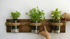 DIY Hanging Herb Garden (with mason jars!) by /u/FrankenBunny