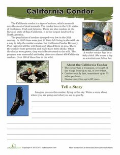 Worksheets: California Condor