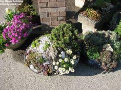 terasy květiny v nádobách - Hledat Googlem Plants, Plant, Planets