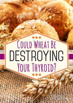 Find out if wheat could be destroying your thyroid. If you are dealing with hypothyroidism you MUST read this!