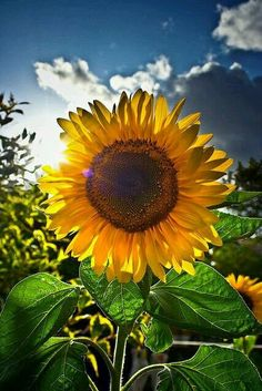 What do you see...sunshine peeking behind a big beautiful flower! A true smile comes forth.