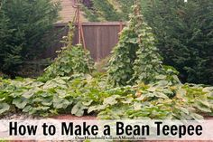 Want a garden your kids can have fun in? Turn your bean plot into a fort by building a teepee for the beans to climb up