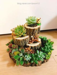 New Succulent Garden Ideas Projects Diy Terrarium Ideas Succulent Wreath, Succulent Pots, Succulents Garden, Terrarium Diy, Diy Garden, Garden Care, Garden Ideas, Propagating Succulents, Succulent Arrangements