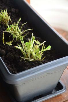Rúcula 1 Herb Garden, Vegetable Garden, Garden Tools, Growing Veggies, Patio Plants, Fruits And Vegetables, How To Dry Basil, 1, Food
