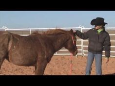 """What an amazing youth! Check out this follow-up video of 13-year-old Renee Pope and her horse, """"Kit.""""   TRR A Stylish Kit also known as """"Kit"""" is moving along in her training. Her young trainer who participates in the AQHA's Ranching Heritage Young Horse Development Program explains some of the things that Kit has learned like longeing and being sensitized and desensitized to objects."""