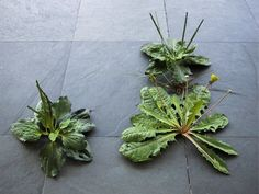 Weed, 2004, painted PVC, epoxy, wire, variable dimensions | Tony Matelli