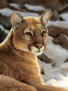 Cougar in Winter; it's Good to Have a Sense of Serenity Set Within. (by Victoria Wilson-Schultz). Big Cats Art, Cat Art, Great Western, Western Art, Terry Redlin, Lion Cub, Mountain Lion, Thomas Kinkade, Pumas