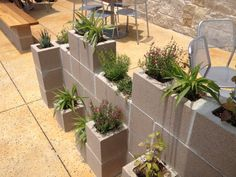 use this cinder block 'garden' as 'wall' in the backyard!
