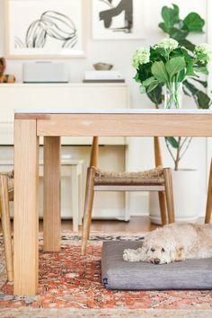 Laylo Pets Home Tour with Monica Wang - Dog Milk Cat Basket, Tea Cup Poodle, Dog Milk, Designer Dog Beds, Pet Home, Cat Design, Dog Accessories, Bed Covers, Pets