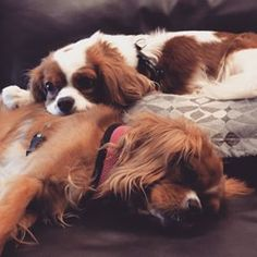 Psssst ,  I post * w * a * l * k * exhaustion (they know the word) Alfie & Ella the cavaliers