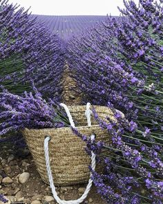 My inner landscape: Photo Provence Lavender, Lavender Cottage, Lavender Color, Lavender Flowers, Love Flowers, Purple Flowers, Beautiful Flowers, French Lavender Fields, Purple Aesthetic