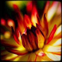 The that hid in the shadows waiting for the right time. #pnw #macro_flowers #ig_flowers #flowerstalking #9vaga_flowersart9 #ig_mood #bestcaptureglobal #hot_macros #em_member #smallworld_uc #pocket_pretty #topfleur #fav_flowers_ #quintaflower #flowersandmacro #my_daily_flower #igscflowers #flipping_flowers #Macroandflora #macroclique #saylovetonature #tgif_macro #eye_for_earth #epix_flowerz #pocket_macro #flaming_flora #petal_perfection #lens_it2me