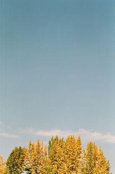 RaySoda 회사에서 사진으로 가을하늘 구경.