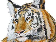 Ilustracion Panthera tigris tigris (Tigre de Bengala)