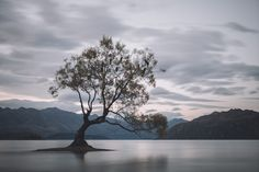 Lake Wanaka, New Zealand - That Wanaka tree. by Michiel Pieters on 500px