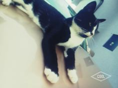 #this#is#my#love#my#cat#Tini#i#love#you