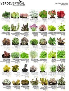 3 Artistic Clever Hacks: When To Plant Vegetable Garden Mother Earth backyard vegetable garden awesome.Vegetable Garden For Beginners Companion Planting. Succulent Gardening, Cacti And Succulents, Planting Succulents, Gardening Tips, Planting Flowers, Organic Gardening, Succulent Names, Flowering Succulents, Identifying Succulents