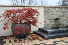 Fächerahorn (Acer) im Pflanzgefäß auf einer Natursteinterrasse