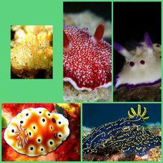Sea slugs collage 17