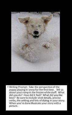 Find Out Why Dogs Eat Poop writing prompt: perspective Photo Writing Prompts, Writing Pictures, Creative Writing Prompts, Narrative Writing, Writing Workshop, Writing Journals, Sentence Writing, Opinion Writing, Persuasive Writing
