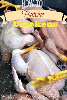 Chicken Coop - - How to butcher chickens yourself. Great tips for processing and butchering your chickens for meat at home. Building a chicken coop does not have to be tricky nor does it have to set you back a ton of scratch. Raising Meat Chickens, Keeping Chickens, Do It Yourself Inspiration, Mini Farm, Thing 1, Homestead Survival, Hobby Farms, Chickens Backyard, Baby Chickens