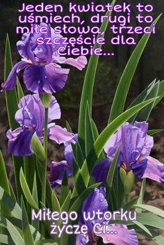 Good Morning, Tuesday, Polish, Plants, Buen Dia, Vitreous Enamel, Bonjour, Plant, Good Morning Wishes