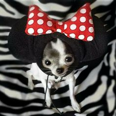 Minnie Chi-mouse