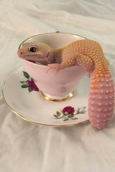 Best 22 Cute leopard gecko https://meowlogy.com/2018/02/14/22-cute-leopard-gecko/ Geckos are extremely fertile and a female can create plenty pairs of eggs in 1 season