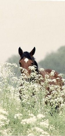 riding in a field of flowers, priceless