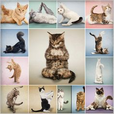 yoga cats....i couldn't resist :p