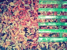 Photo by Maria Josè Cinti. #autumn
