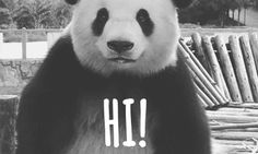 Support for Smallbiz : Funny Pandabear GIF