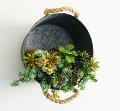 Galvanized Bucket Hanging Succulent Planter