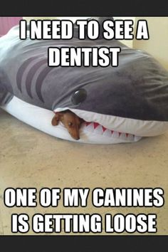 It's FUNNY FRIDAY! Another hilarious funny meme! Click the picture to see 100 more Funny Friday pictures! Animal Memes, Funny Animals, Funny Dogs, Cute Animals, Funny Memes, Dog Memes, Funny Captions, Puns Jokes, Animal Quotes