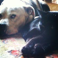 Bros World Domination, Dogs, Animals, Animales, Animaux, Doggies, Animal, Pet Dogs, Animais