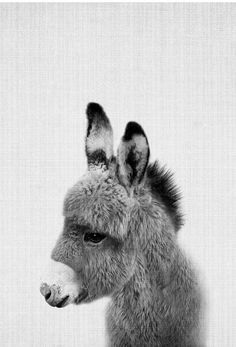 Print 64 - Lila x Lola - Premium Poster - Things for My Wall - animals Cute Baby Animals, Animals And Pets, Black Animals, Wild Animals, Beautiful Creatures, Animals Beautiful, Mundo Animal, Tier Fotos, Animal Photography