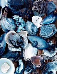 All the gorgeous colors of the sea are in this collection of shells. Love.