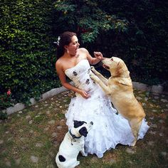 Pets and wedding dresses!