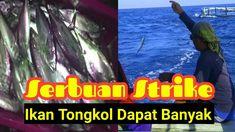 Serbuan Strike Ikan Tongkol Dapat Banyak Di Spot Rumpon Bu Susi Vacation Packages