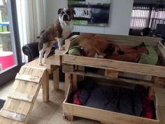 Many persons have pets in the homes and they protected these pets with the comfortable place giving and also giving proper food to the pets. In this picture a beautiful wooden pallet design is shown which is a beautiful recycled wooden pallet dog house where you can see that some cute dogs taking rest and some playing on this.