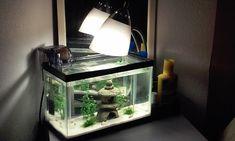 Nano Fish For Small Aquariums | My Aquarium Club
