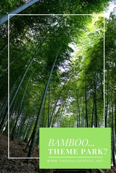 An Amazing Bamboo Forest on Geoje Island South Korea Travel, Travel Info, Adventure Awaits, How Beautiful, Mornings, Bamboo, Zip Lining, Calm, Posts