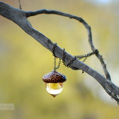 Acorn amber necklace Autumn Fall jewelry botanical by EightAcorns
