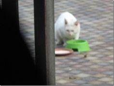 :: Amivedi-Nederland   Stichting voor vermiste en gevonden huisdieren ::