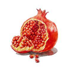 ArtZ Vitamins A Pomegranate ' by Irina Sztukowski - http://irina-sztukowski.artistwebsites.com/featured/artz-vitamins-a-pomegranate-irina-sztukowski.html