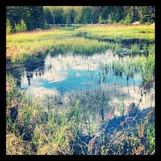 Swamp beauty - near Haliburton, Ontario. Ontario, Places Ive Been, Hiking, Trees, Cottage, Spaces, Mountains, My Favorite Things, Instagram Posts