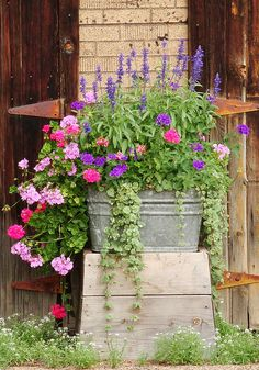 pot Tub filled with trailing flowers.Tub filled with trailing flowers. Container Flowers, Flower Planters, Container Plants, Garden Planters, Container Gardening, Geranium Planters, Galvanized Planters, Succulent Containers, Fall Planters